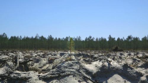 Film documentaire «Le temps des Forêts», réalisé par François-Xavier Drouet