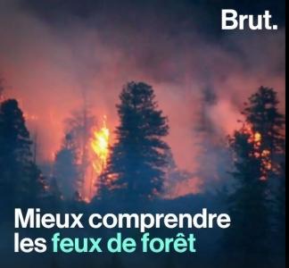 Brut Nature - Comprendre les feux de forêt par Eric Rigolot, le 25 Août 2020