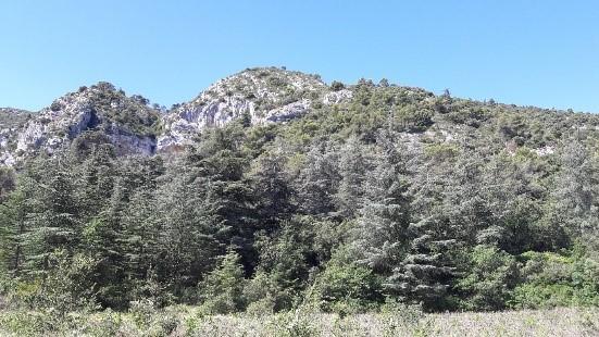 forest_ecosytems