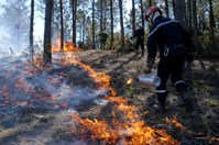 Effet du feu sur les arbres - PEF