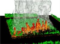 Représentation numérique du couvert végétal - PEF