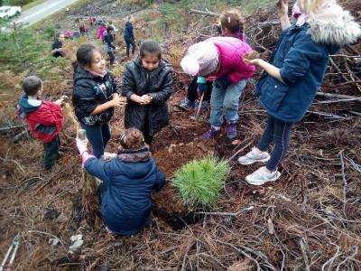 Plantation Salzmann projet Natura 2000