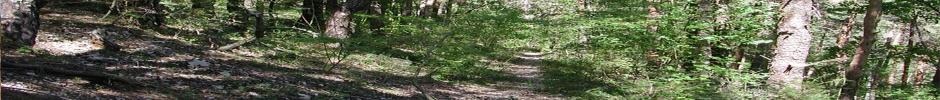 Unité de Recherche Ecologie des Forêts Méditerranéennes