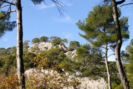 Réflexions croisées sur la forêt méditerranéenne