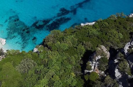Un prix pour la biodiversité des arbres en Méditerranée
