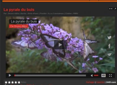 Vercors TV Pyrale du buis