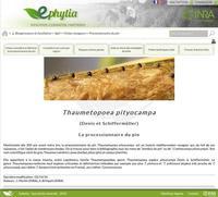 Ephytia
