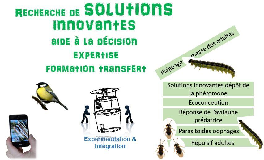 Projet Entomologie Appliquée