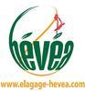 logo HEVEA