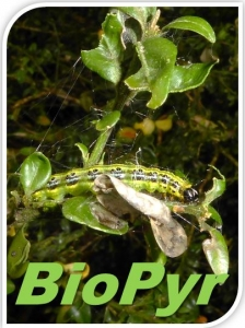 Projet BioPyr