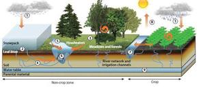 Morris, C., Monteil, C., Berge, O. 2013. The life history of Pseudomonas syringae: linking agriculture to earth system processes. Annual Review of Phytopathology, 51, 85-104