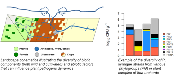 Analyzing the structure and diversity of plant micro-organisms populations in various substrates and contexts