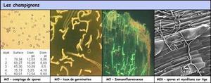Quelques applications de la microscopie pour les champignons