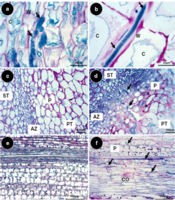 Ajouz, S., Bardin, M., Nicot, P.C., and El Maataoui, M. 2011. Comparison of the development in planta of a pyrrolnitrin-resistant mutant of Botrytis cinerea and its sensitive wild-type parent isolate. European Journal of Plant Pathology, 129, 31-42