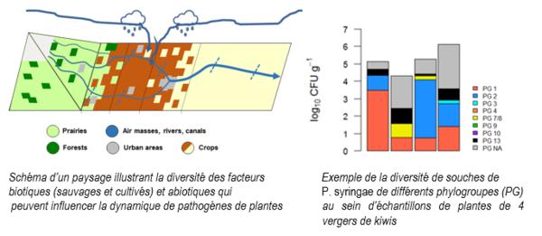 Analyse de la structure et la diversité de populations de micro-organismes de plantes au sein de divers substrats et contextes