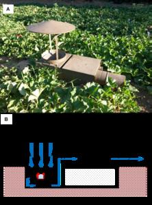 Piège à aspiration conçu pour échantillonner les insectes ailés dans des sites disposant d'une prise électrique