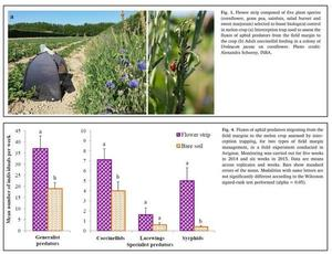 Implementation of flower strips near to the crop can contribute to the regulation of aphid populations and/or their viruliferous potential, thus increasing the effectiveness and durability of resistance mediated by the Vat gene.