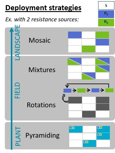 Modelling control strategies of epidemics