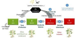 Modélisation de stratégies de lutte contre les épidémies : architecture SEIR du modèle