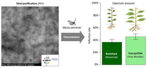 Experimental calibration of models