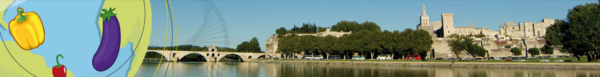 17th EUCARPIA Meeting Genetics and Breeding of Capsicum and Eggplant. 11-13/09/2019. Avignon, France