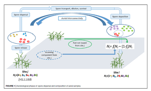 Leyronas, C., Morris, C.E., Choufany, M., Soubeyrand, S. (2018). Assessing the aerial interconnectivity of distant reservoirs of Sclerotinia sclerotiorum. Frontiers in Microbiology, 9 : 2257. DOI : 10.3389/fmicb.2018.02257