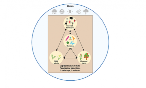 Lacroix, C. (2021). Biodiversity-disease relationships in wild plant communities differentially affected by land use. New Phytologist, 300, 2094-2096. DOI:10.1111/nph.17362