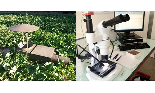 Schoeny, A.; Rimbaud, L.; Gognalons, P.; Girardot, G.; Millot, P.; Nozeran, K.; Wipf-Scheibel, C.; Lecoq, H. (2020) Can winged aphid abundance be a predictor of cucurbit aphid-borne yellows virus epidemics in melon crop? Viruses, 12, 911. DOI : 10.3390/v12090911