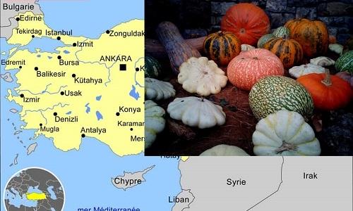 Topkaya S., Desbiez C., 2020. Molecular characterization of Cucurbit aphid-borne yellows virus (CABYV) affecting cucurbits in Turkey. Zemdirbyste-Agriculture 107, 353-358. DOI :10.13080/z-a.2020.107.045