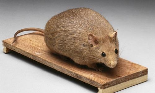Meziat, C., Boulghobra, D., Strock, E., Battault, S., Bornard, I., Walther, G., Reboul, C. (2019). Exercice training restores eNOS activation in the perivascular adipose tissue of obese rats : Impact on vascular function. Nitric Oxide, 86, 63-67. DOI : 10.1016/j.niox.2019.02.009