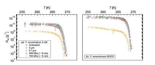 Kunert, A. T., Pöhlker, Tang, K., Krevert, Wieder, Speth, Hanson, L. E., Morris, C. E., Schmale III, D. G., Pöschl, Fröhlich-Nowoisky, J.  (2019). Macromolecular fungal ice nuclei in Fusarium: effects of physical and chemical processing. Biogeosciences, 16, 4647-4659.  DOI : 10.5194/bg-16-4647-2019