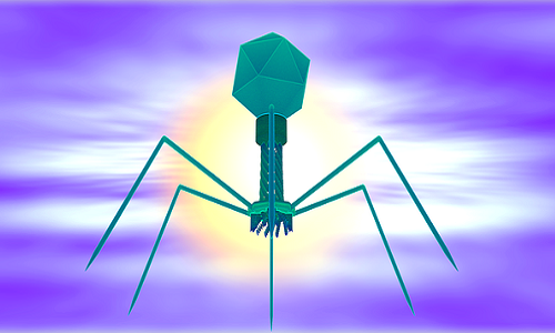 Trotereau, A., Boyer, C., Bornard, I., Pécheur, M.J.B., Schouler, C., Torres-Barceló, C. (2021). High genomic diversity of novel phages infecting the plant pathogen Ralstonia solanacearum, isolated in Mauritius and Reunion islands. Scientific Reports 11, 5382, 10 p. DOI:10.1038/s41598-021-84305-7