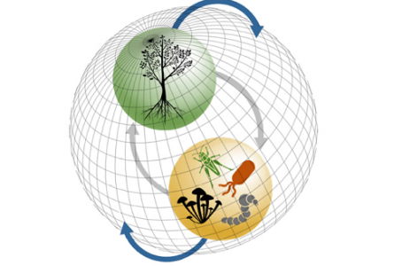 Morris, C. E. (2018). Phytobiomes contribute to climate processes that regulate temperature, wind, cloud cover and precipitation. Phytobiomes Journal, 2 (2), 55-61. DOI : 10.1094/PBIOMES-12-17-0050-P