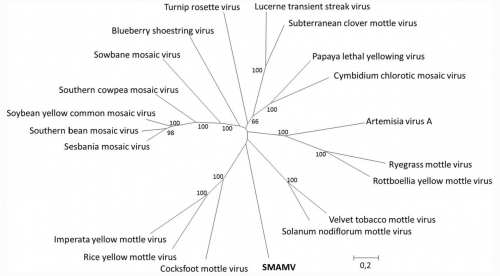 Desbiez, C., Verdin, E., Lecoq, H. (2021). Complete sequence of an isolate of snake melon asteroid mosaic virus confirms that it is a member of a distinct sobemovirus species. Archives of Virology, 166, 2311-2313. DOI:10.1007/s00705-021-05109-8