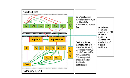 Wang, N., He, Lacroix, C., Morris, C. E., Liu, Ma, F. (2019). Soil fertility, leaf nutrients and their relationship in kiwifruit orchards of China's central Shaanxi province. Soil Science and Plant Nutrition, 65, 369-376. DOI : 10.1080/00380768.2019.1624481