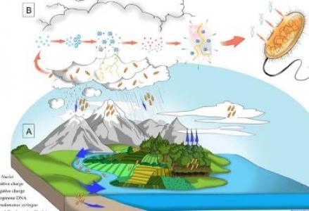 Blanchard, L. S., Monin, A., Ouertani, H., Touaibia, L., Michel, E., Buret, F., Simonet, P., Morris, C. E., Demanèche, S. (2017). Survival and electrotransformation of Pseudomonas syringae strains under simulated cloud-like conditions. FEMS microbiology ecology, 93 (5), fix057. DOI : 10.1093/femsec/fix057