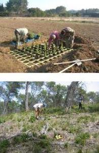 Plantation de pins et de feuillus, comptage de la régénération naturelle