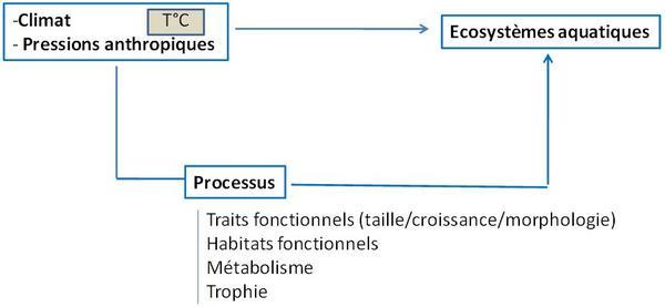 ecosystèmes aquatiques