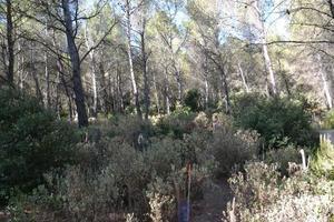 Plantation sous couvert léger avec sous-bois abondant