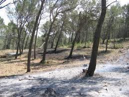 Site expérimental de Barbentane