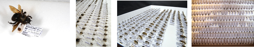 collection d'abeille