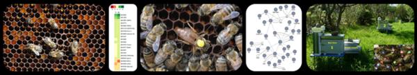 compteur avec abeilles marquéesweb