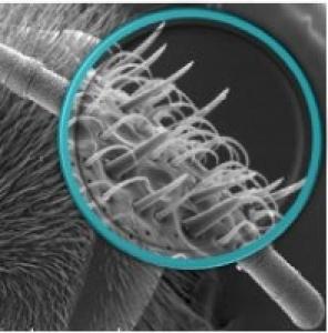 membre d'une abeille