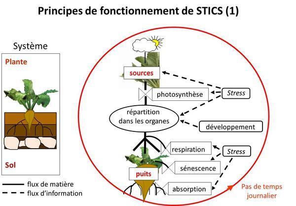 Principes de fonctionnement du système sol-plante de Stics