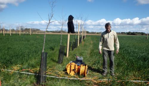 Photo de mesures de tomographie électrique sur le dispositif expérimental Agroforestier DIAMs, géré par l'UMR Eco&Sol,mars 2020