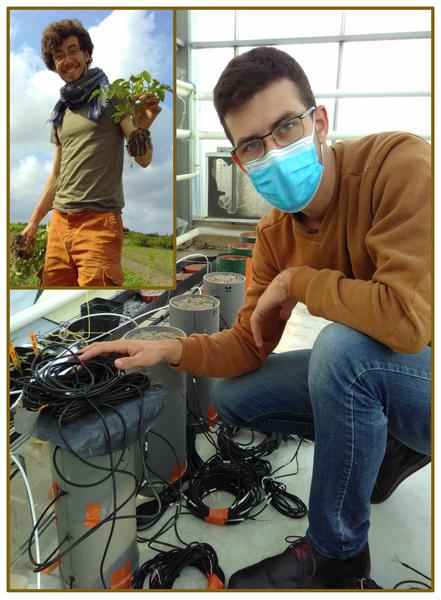 Photos de Samuel lors d'expérimentations en pleins champs et labo