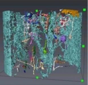 3D pour comprendre les processus d'écoulement dans le sol