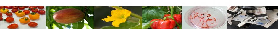 Bandeau fruit, fleur, boite de petri, microscope