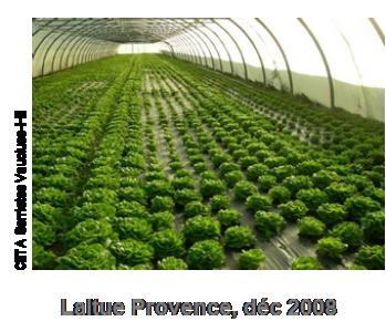 Des génotypes de Lactuca résistants à des nématodes