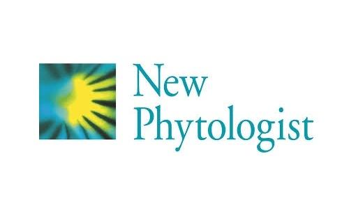New phytologist